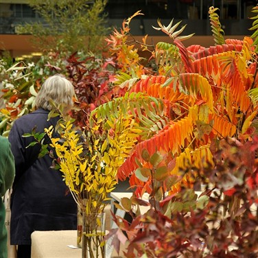 Harrogate Autumn Flower Show