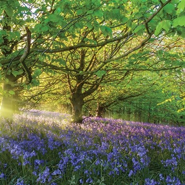Chiltern Hills & Bluebells at Kew