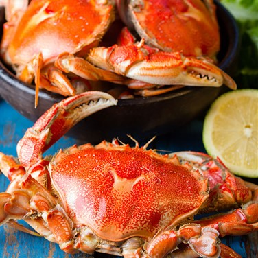 Cromer, Crab & Lobster Festival