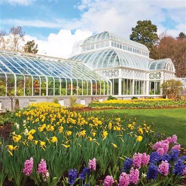 Chrysanthemum at Kew & Maritime Greenwich 2022