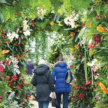 Kew Gardens Orchid Festival & Windsor
