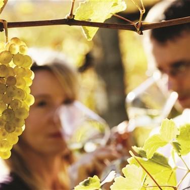 NEW Wine Tasting, Vineyard Tour: Oxford