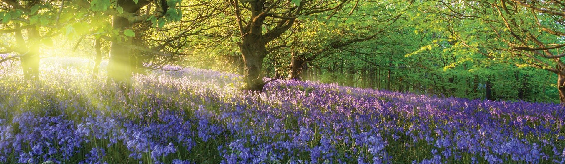 Easter Bluebells at Kew Gardens 2022